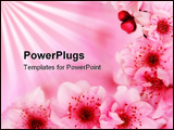PowerPoint Template - Fresh pink soft spring cherry tree blossoms on pink background. Very shallow DOF.