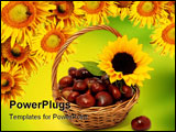 PowerPoint Template - Sunflower with chestnuts on the white background