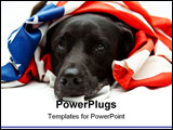 PowerPoint Template - black Labrador mix wearing US flag on white background