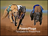 PowerPoint Template - Greyhounds at full speed during a race