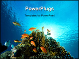 PowerPoint Template - coral and fish taken in the red sea.