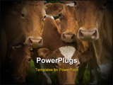 PowerPoint Template - group of cows having a stare