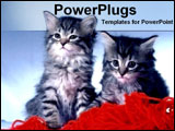 PowerPoint Template - two kittens with yarn ball