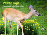 PowerPoint Template - whitetail doe walking through a bunch of flowers