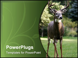 PowerPoint Template - a white tailed deer buck standing tall and proud.