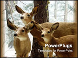 PowerPoint Template - 3 deers staying alert in winter scene.