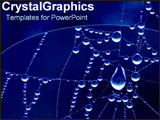PowerPoint Template - Rain drops on spiderweb.