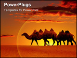 PowerPoint Template - Desert landscape with walking camels at sunset