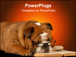 PowerPoint Template - english bulldog sleeping with reading glasses and a novel