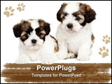PowerPoint Template - puppy mixed-Breed Dog between Shih Tzu and maltese dog