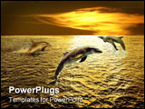 PowerPoint Template - dolphins playing in the sunset