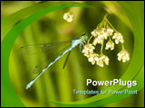 PowerPoint Template - blue dragonfly with green eyes is sitting on white flower