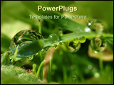PowerPoint Template - Drops in the grass