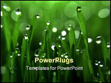 PowerPoint Template - glistening dewdrops on blades of green grass