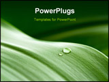 PowerPoint Template - crystal clear drops on a green leaf