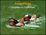 PowerPoint Template - two wood ducks glide across the water of a pond.