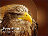 PowerPoint Template - Detail of bird of prey bald eagles