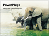 PowerPoint Template - adult and baby elephant Slight blurriness, best at smaller sizes