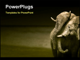 PowerPoint Template - Elephants interacting (Artistic processing)