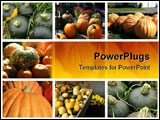 PowerPoint Template - Collage of buttercup, pumpkin, and assorted autumn squashes