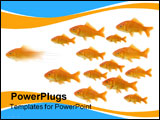 PowerPoint Template - be the first : on goldfish taking the lead of the group isolated on a white background