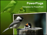 PowerPoint Template - A young bird waits for it