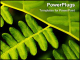 PowerPoint Template - fern leaves