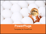 PowerPoint Template - New-born chick in red egg among the lot of white eggs