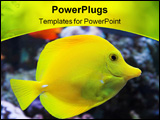 PowerPoint Template - Yellow Tang - tropical marine fish with a coral background