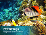 PowerPoint Template - Tropical fishes and coral reef in Red sea