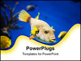 PowerPoint Template - country Spain - Barcelona Aquarium close up
