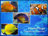 PowerPoint Template - gold fish