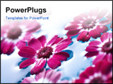 PowerPoint Template - closeup of red flowers floating in water