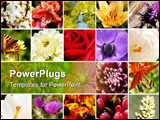 PowerPoint Template - flowers macro collection: roses lilies clematis dahlias crocus tulips cherry blossom anemone