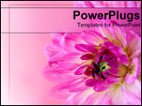 PowerPoint Template - Close-up of pink flower