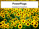PowerPoint Template - Lazio (Italy) - A field of sunflower in a cloudy day.