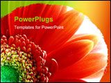 PowerPoint Template - Close up of a flower. The light in the background is intended to give it a divine look.