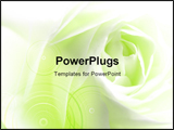 PowerPoint Template - close-up of a white rose