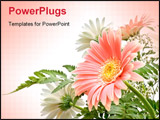 PowerPoint Template - elegant composition of Gerbera flowers with delicate colours