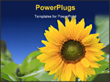PowerPoint Template - this is beautiful sunflower with green leaves