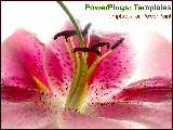 PowerPoint Template - Pink flower close-up.