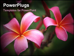 PowerPoint Template - A picture of a plumeria plant, named the Hawaiian Lei Flower in rainbow color.