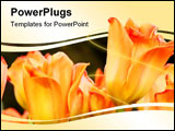 PowerPoint Template - peach colored tulips