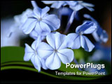 PowerPoint Template - Macro of blue flowers under moonlight.