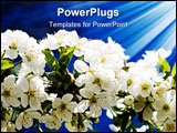PowerPoint Template - Fantastic unusually sunbeams and blooming cherry tree by spring