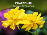 PowerPoint Template - Beautiful yellow color flowers in the gardens