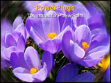 PowerPoint Template - flowers