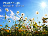 PowerPoint Template - daisy flowers from below with blue sky on sunny summer day