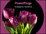 PowerPoint Template - purple tulips against black