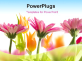 PowerPoint Template - Flowers in spring with white background